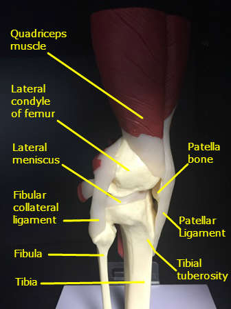 knee pain lateral