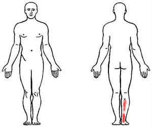 tibialis posterior trigger point